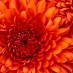 Testgalerie, Das ist eine Blume